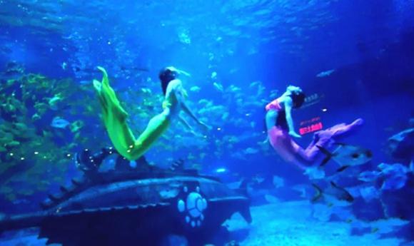 天津海昌极地海洋世界景点门票(和纯真的动物一起)