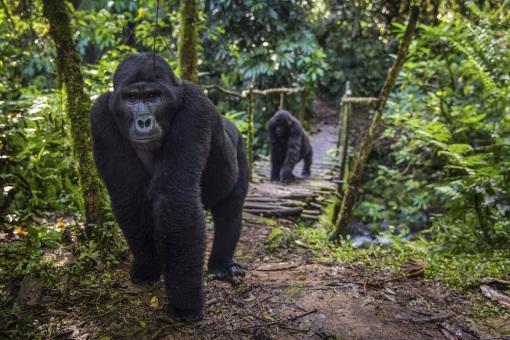 大深林动物图片