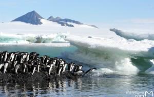 【南极半岛图片】去南极,为企鹅——2016一月庞洛南极半岛之旅
