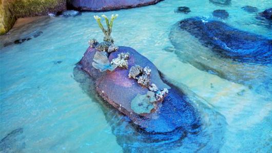 (岛汀梦)分界洲岛一日游海口出发【深度版】
