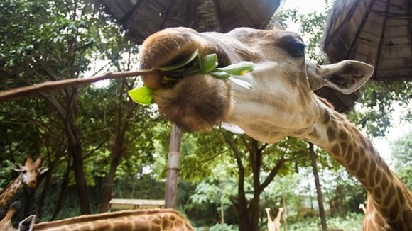 广州长隆野生动物世界门票