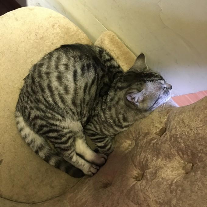猫猫睡觉 可爱 文艺