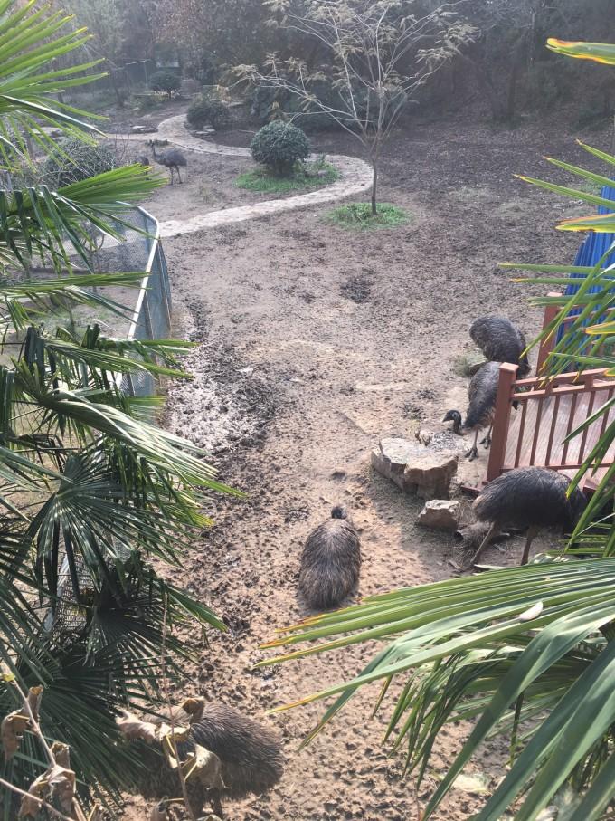 12.1-红山动物园仓促半日游,马鞍山旅游攻略