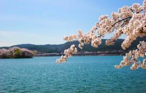 【庆州图片】四月到韩国来赏樱 (釜山 镇海 庆州 首尔)