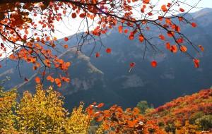 【房山图片】坡峰岭赏红叶