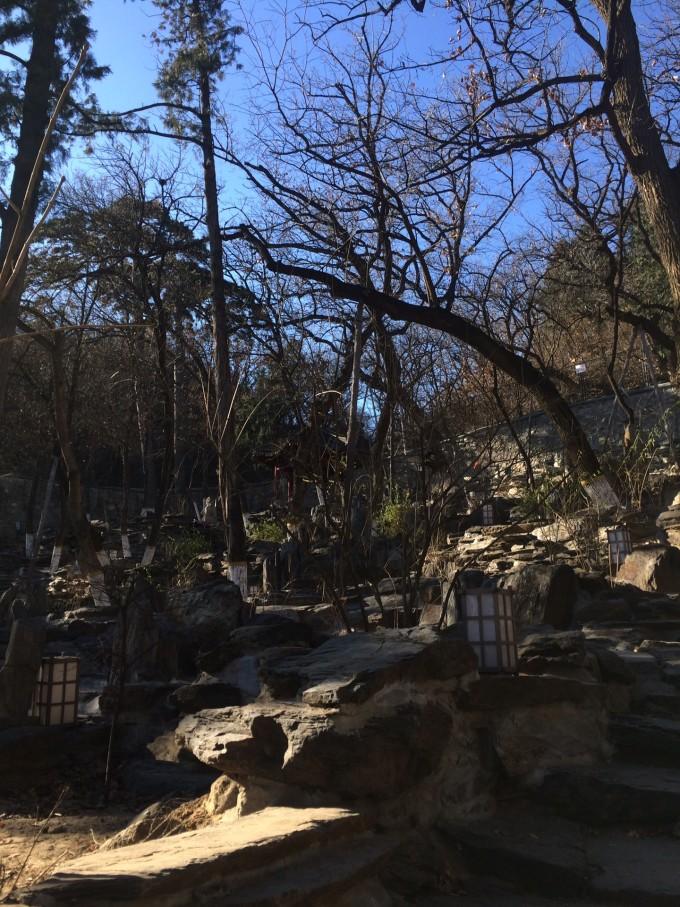 北京白塔寺古树