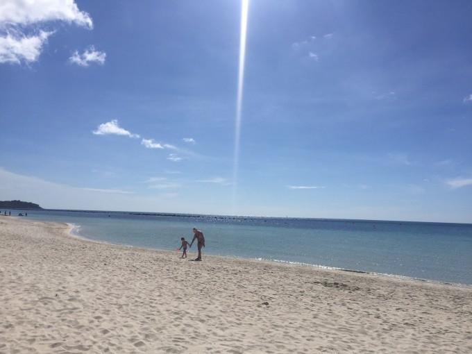 微信头像海滩椰树