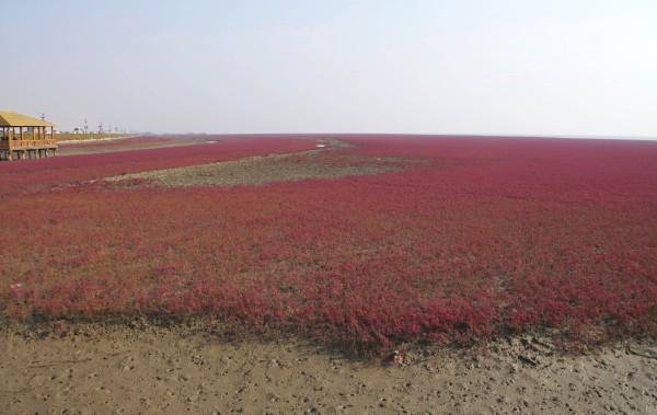 枫叶如丹,红滩似火,本溪关门山大石湖,盘锦红海滩自助