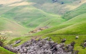【新源图片】新疆-吐尔根杏花沟那一树一树的花开