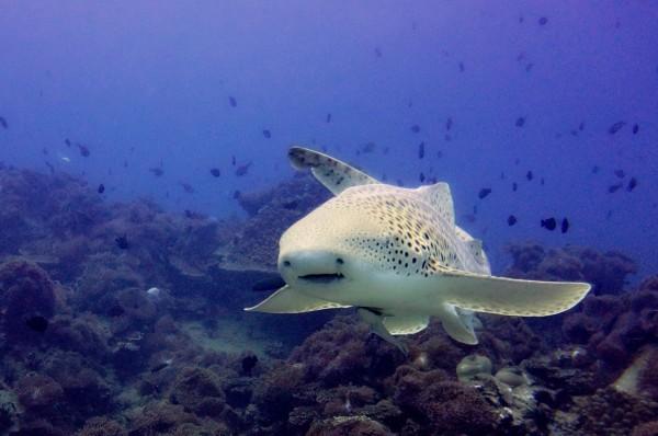 壁纸 动物 海底 海底世界 海洋馆 水族馆 鱼 鱼类 600_398