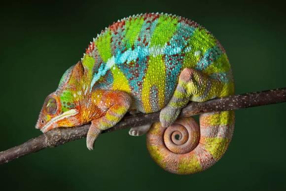 低地斑纹马岛猬:是马达加斯加最奇特的刺猬类动物