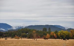 【俄勒冈图片】♔美国西岸自驾游♔火山湖,红木公园,101公路,西雅图未眠夜
