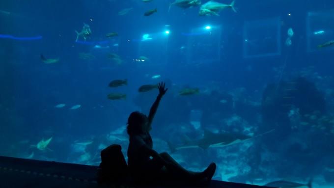 壁纸 海底 海底世界 海洋馆 水族馆 桌面 680_383