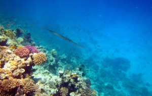 【赫尔格达图片】另一个世界——深潜在红海的天堂(埃及行记之四)