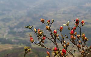 【南黄古道图片】清明徒步:霞客与南黄,看古道花开