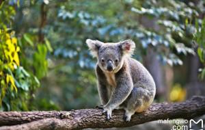 【凯恩斯图片】匆匆一瞥,南半球秋日时光的road trip (澳大利亚黄金海岸and凯恩斯)