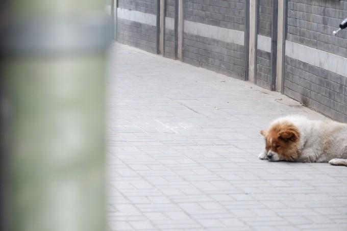 北京自助遊攻略
