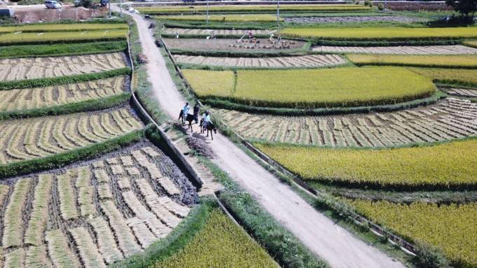 雲南,開滿鮮花的舒閒之地 29