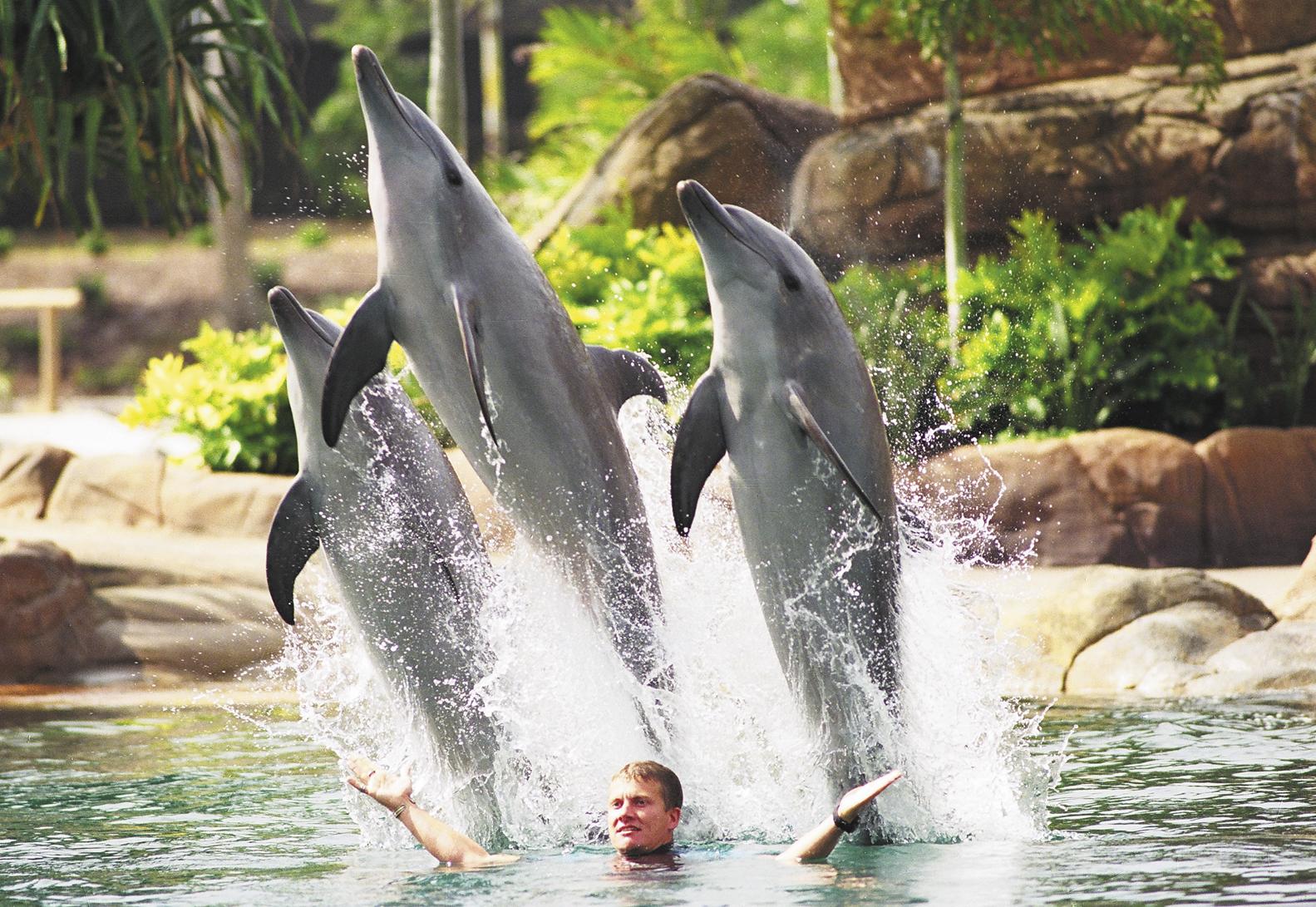 澳大利亚旅游黄金海岸华纳电影世界门票 送园内8折个人消费券 海洋世界 天堂农庄 狂野水世界 自助午餐 考拉照