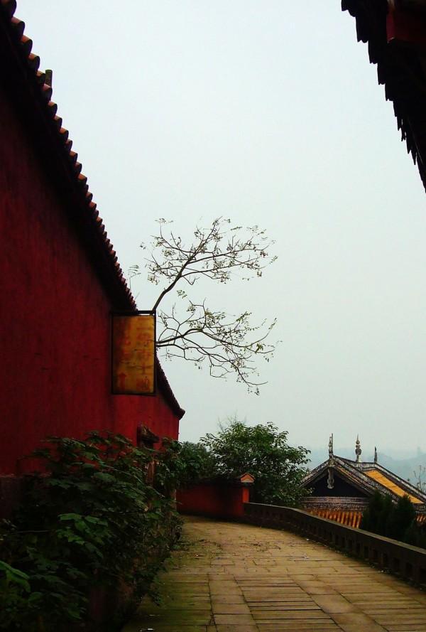大大成人社区,亚洲最大成人社区usa,巨乳玛雅中国最大成人社区