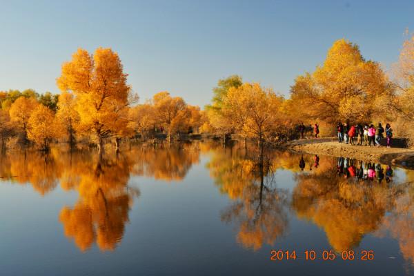 最爱秋天 2 如画的金塔胡杨林