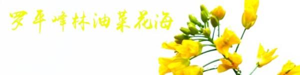 罗平峰林油菜花海