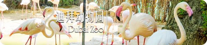 迪拜动物园 · Dubai Zoo